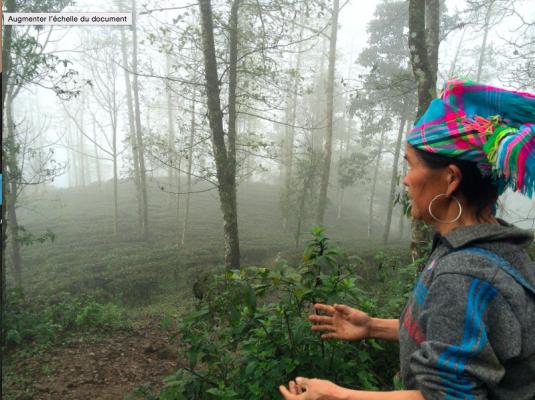 Découverte des plantations de Sapa avec Mamma Sheum
